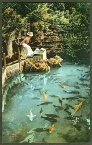 Postcard showing Devil's Hole as an aquarium